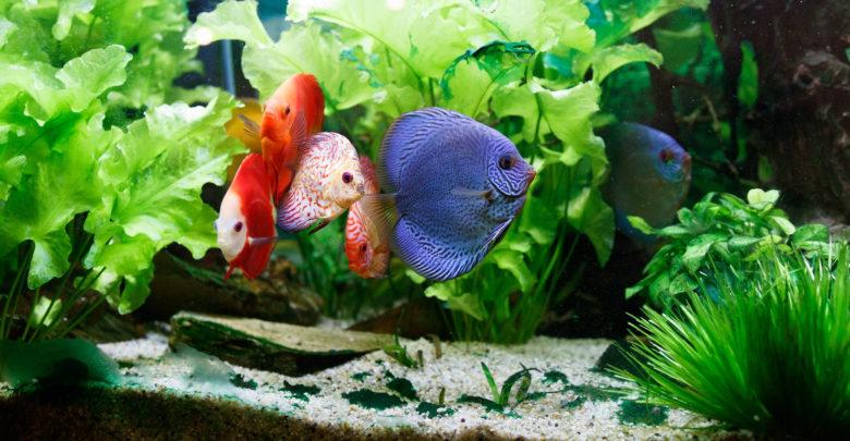 Photo of Do I Need a Heater for My Fish Tank?