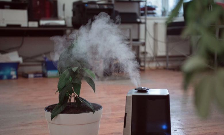 Photo of Where to Put Humidifier for Best Results?